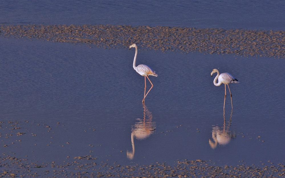 flamingo_20seven13_DEK1809