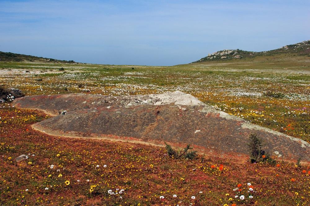 landscapeWCNP_4207