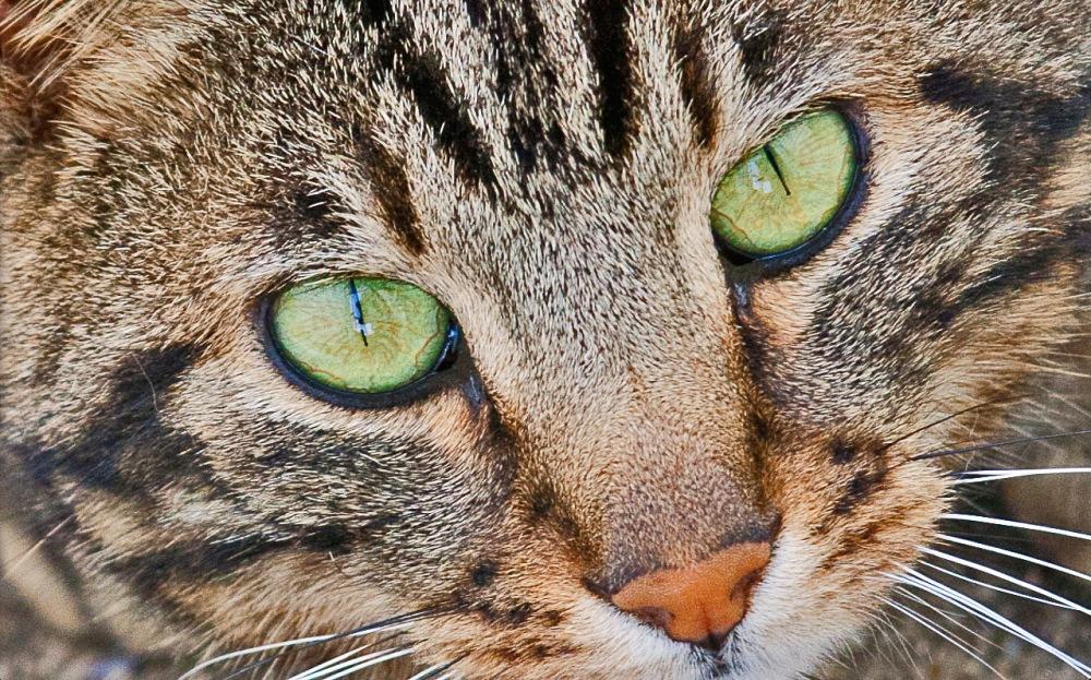 Obelix eyes