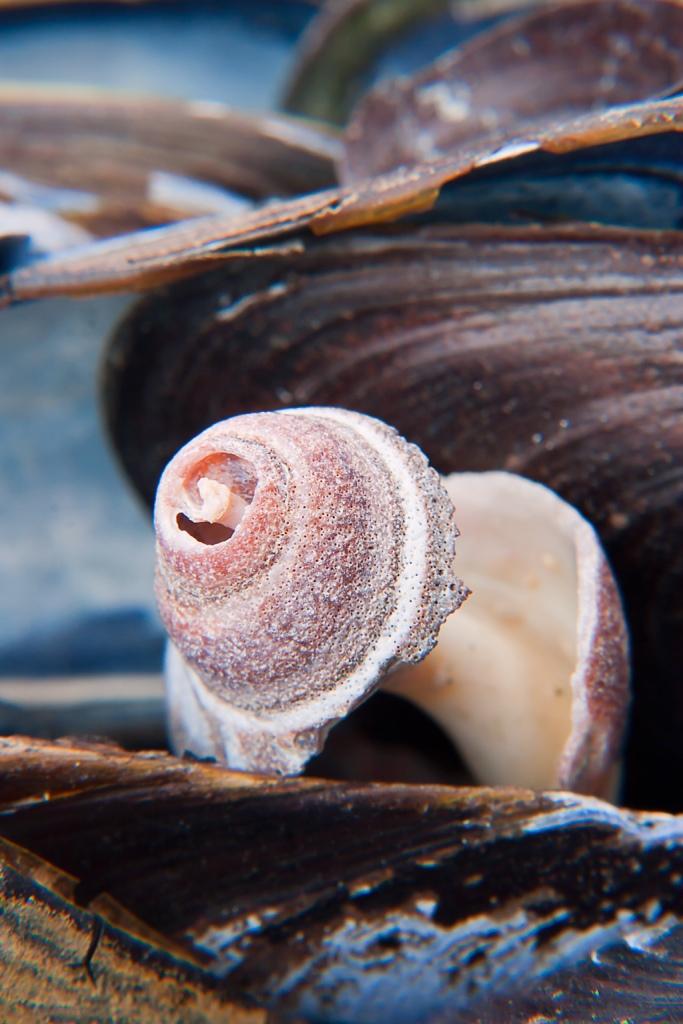 Cold blue shells
